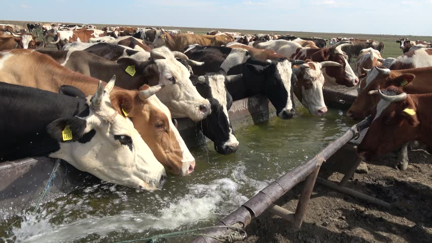 Buy Cattle Farming Water Filter Solutions - Animal Farm Water Filter & Purifier Manufacturer